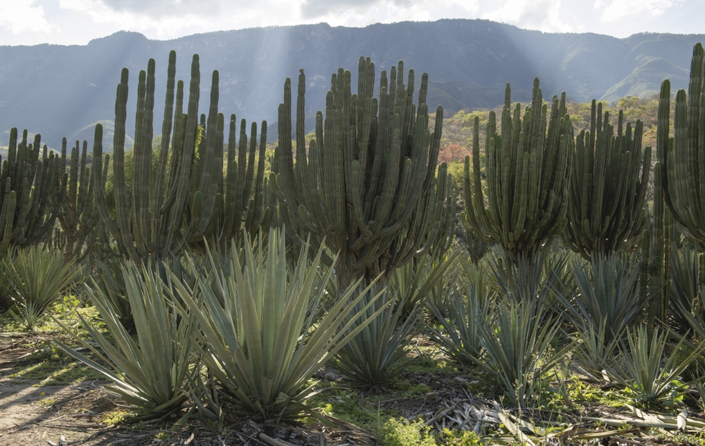 Photo of UArizona Scientists Offer Climate-Smart Model for Desert Food Production