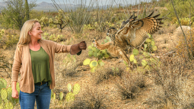 Photo of Arizona-Sonora Desert Museum Launches Popular New Avian Adventures