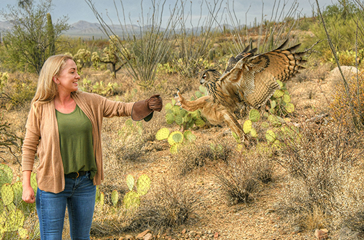 Photo of Arizona-Sonora Desert Museum Launches Popular New Avian Adventures