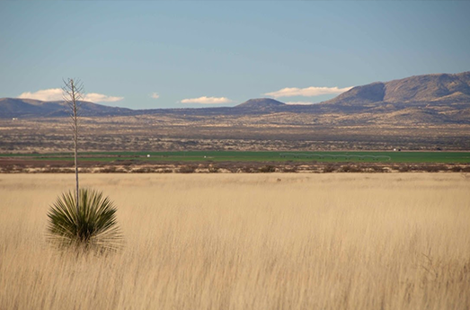 Photo of Arizona Land and Water Trust Protects Tombstone Ranch