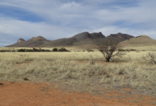 Photo of Arizona Land and Water Trust Protects Rose Tree Ranch